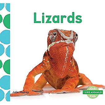 Lizards (I Like Animals!)