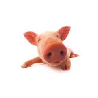 Pig - Don'T Call Me Babe Fridge Magnet