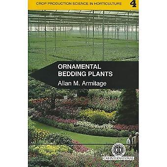 Plantes ornementales de literie