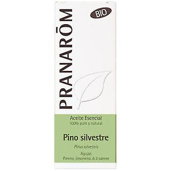 Pranarom Pine essence 30Ml