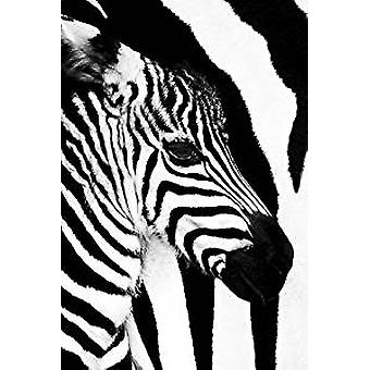 Poster - Zebra Mare and Foal - Wall Art CJ1583