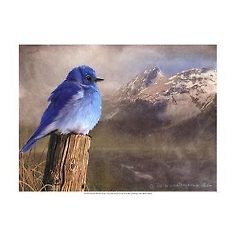 Berg Blue Bird Poster Print by Chris Vest (19 x 13)