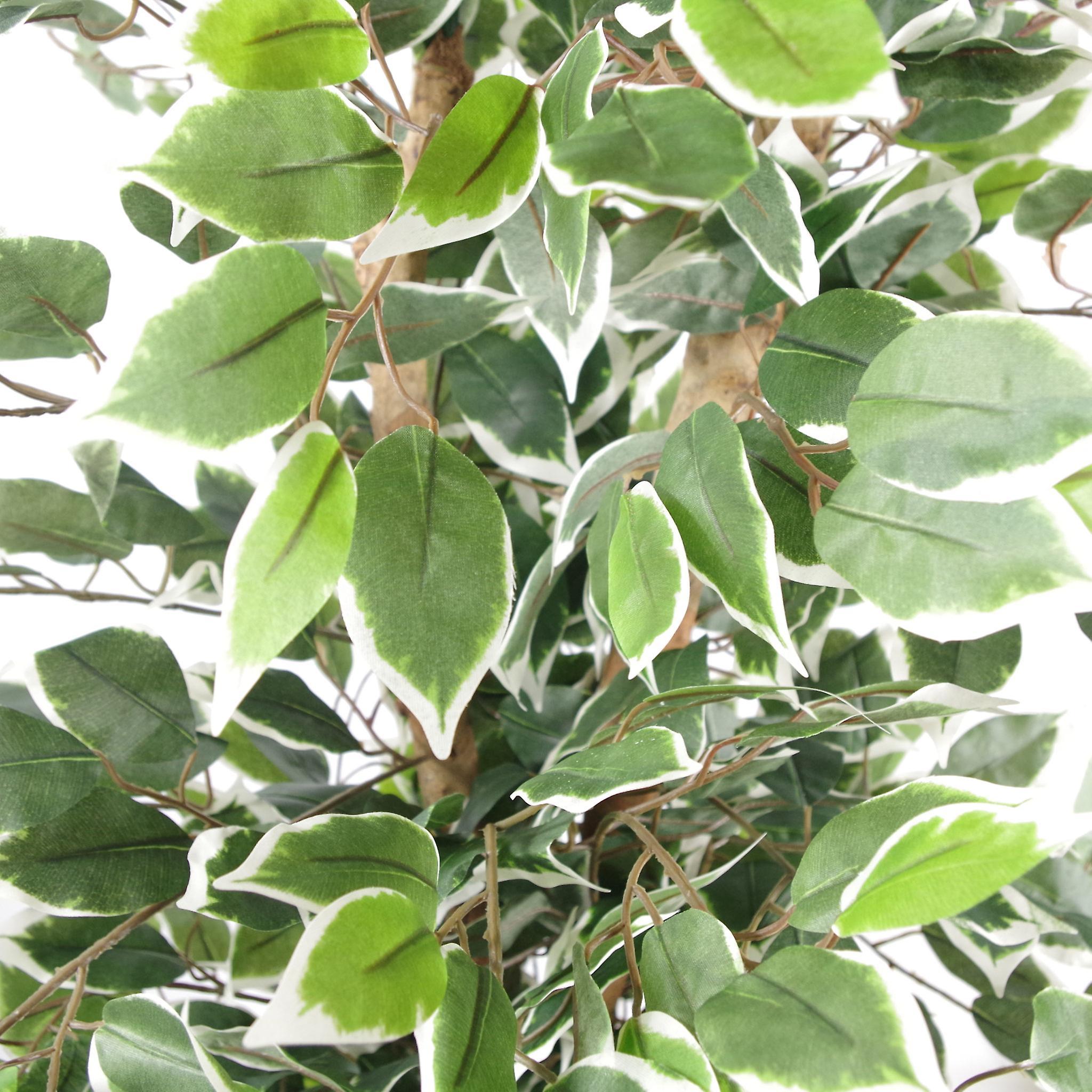130cm Variegated White/Green Bushy Ficus Tree