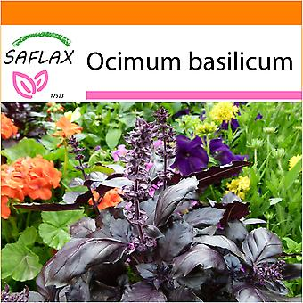 Saflax - Garden in the Bag - 200 seeds - Red Basil - Basilic rouge - Basilico rosso  - Albahaca   - Rotes Basilikum