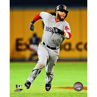 Dustin Pedroia 2013 Action Photo Print