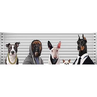 Most Wanted Dogs Poster   Kleinformat T�rposter