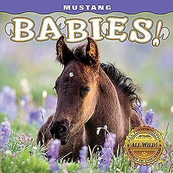 Mustang Babies! [Board book]