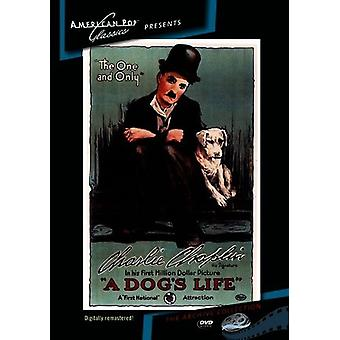 Dog's Life [DVD] USA import