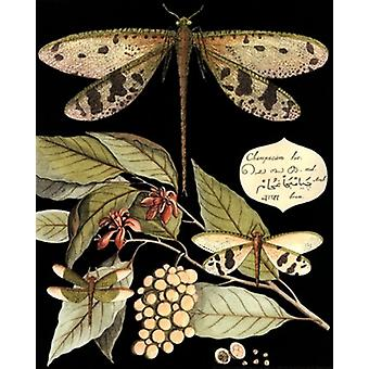 Whimsical Dragonflies On Black I Poster Print by Vision studio (8 x 10)