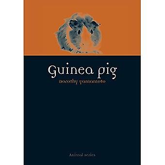 Guinea Pig (Animal)