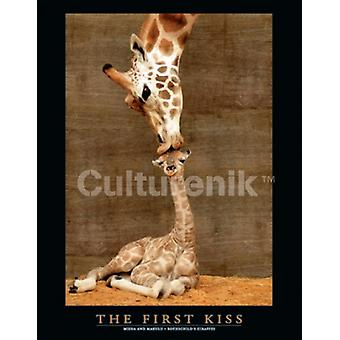 First Kiss - Giraffes Poster Poster Print