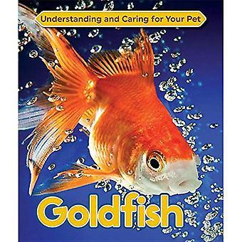 Guldfisk (förstå och ta hand om ditt husdjur)