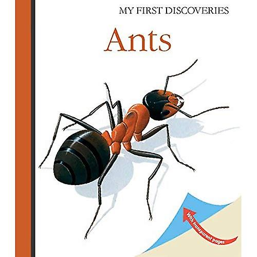 Ants (My First Discoveries)