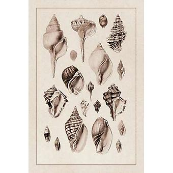 Shells Sessile Cirripedes #3 Poster Print by  GB Sowerby