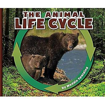 The Animal Life Cycle (Nature Cycles)