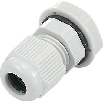 KSS EGRWW21GY4 Cable gland PG21 Polyamide Light grey (RAL 7035) 1 pc(s)